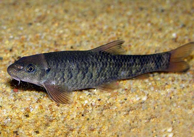 Лечение псориаза рыбками или fish-терапия || Лечение псориаза рыбками
